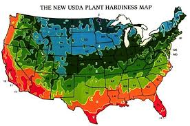 compare the temperature extremes in your area to those of the texas zones when making planting decisions