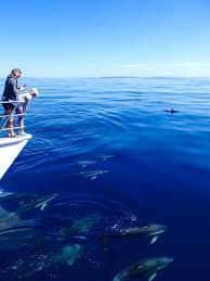 Dolphin Watching In The Hauraki Gulf Marine Park Around