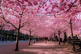 Curiosi di scoprire le varietà della sezione alberi che regalano una bellissima fioritura rosa? 15 Strade Magiche All Ombra Di Alberi E Fiori Fotogallery Idealista News