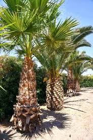 patio palm tree lighted palm trees for patio inspirational relax e outdoor patio palm trees
