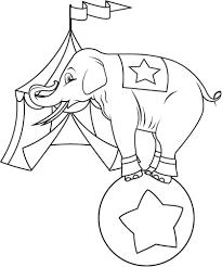 Elephant Has Always Managed To Lure