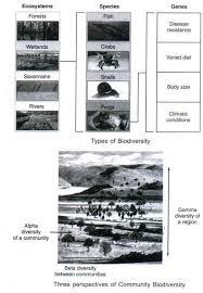 biodiversity essays bio diversity essay hard work leads to success essay discovery biodiversity homework help custom university admission