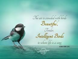 Quotes And Birds
