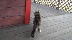 Cat Walk - YouTube