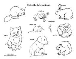 Small Picture Baby Animal Labeled Coloring Page