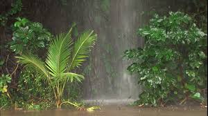 tropical rainforest raining. Interesting Tropical HD Rights Managed Stock Footage  173553818 Inside Tropical Rainforest Raining H