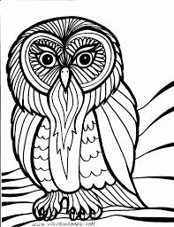 Small Picture Owl Color Page Coloring Free Coloring Pages