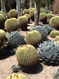 Small Picture find this pin and more on desert landscaping by blancacoronel1