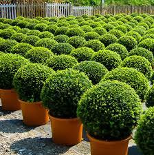 profitable plant nursery business