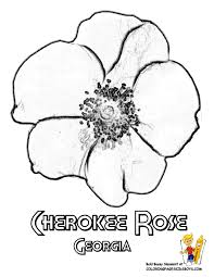 Small Picture Georgia Cherokee Rose Coloring at YesColoring Happy GA Day 12