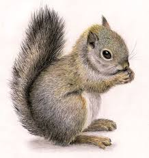 Small Picture Best 25 Squirrel illustration ideas on Pinterest Squirrel art
