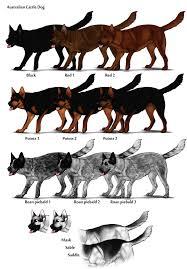 Dog Color Chart Australian Cattle Dog Herding Dog Farms Game Wikia