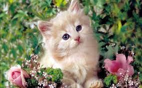 Kittens Wallpaper: Cute Kitten ...