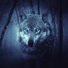 4K Wolf Wallpaper For Android ...