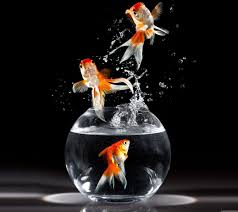 goldfish wallpaper desktop. Delighful Goldfish 3D Goldfish In Water Wallpapers Wallpaper In Desktop