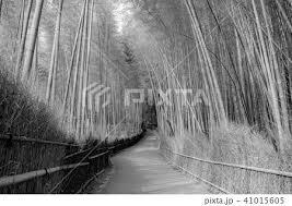 笹 タケ 和風 生垣の写真素材 Pixta