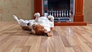laminate flooring installation living room fireplace with dog