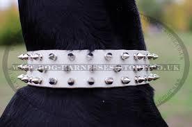 doberman pinscher spiked collars