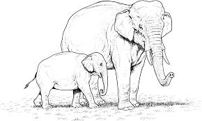 Small Picture Free Elephant Coloring Sheets Printable Elephant Coloring Pages