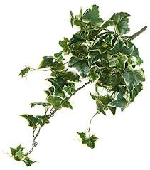Amazon.com: Artificial Variegated Ivy Holland Bush: Kitchen & Dining