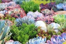 Small Picture Garden Design Garden Design with Succulent Garden Design Pictures