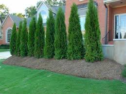 Image of: Privacy Fence Trees Models
