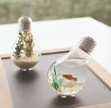 a bright idea, light bulb, terrarium, upcycling, diy project