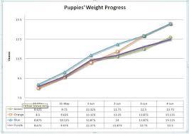 West Highland Terrier Growth Chart Tribeca Westies Puppies Progress Weight