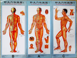 Acupuncture Chart Poster Www Buyamag Com Acupuncture Charts Posters Acupressure Qdex