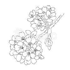 桜の花線画イラスト No 1042097無料イラストならイラストac