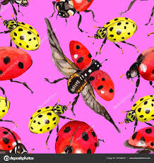 божья коровка экзотических диких насекомых шаблон в стиле акварели