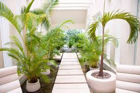 brilliant easy indoor garden ideas intended for small home decoration ideas