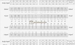 Perio Charting Form Printable Bedowntowndaytona Com