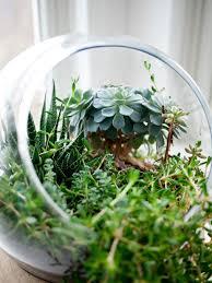 creating a mini terrarium
