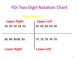 Palmer Notation Charting 19 Disclosed Tooth Chart Fdi