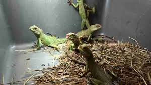 petsmart reptiles for sale. Contemporary Petsmart Share On Facebook  In Petsmart Reptiles For Sale