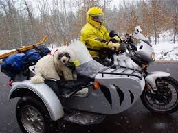 slobbery side kicks dogs in motorcycle sidecars