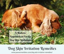 Dog Skin Irritation Remedies | Use Natural Remedies to Soothe Itchy ...