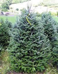 Oakberry Christmas Tree VarietiesTypes Of Fir Christmas Trees