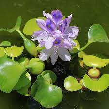 the best small plants for small ponds