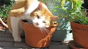 can cats eat catnip here s what you