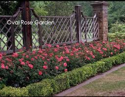 Small Picture Backyard Rose Garden Home Design Ideas murphysblackbartplayerscom