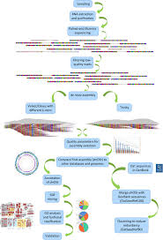 Illumina Sequencing Flow Chart Analysis Flowchart Overview Of The Different Steps Followed