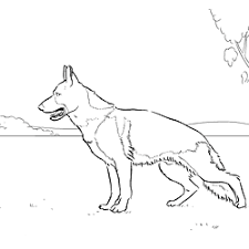 Kleurplaten Honden Duitse Herder Ausmalbild Australian Shepherd