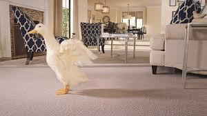 Carpet Showrooms Near Me
