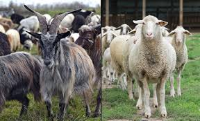 Image result for judgment of sheep and goats