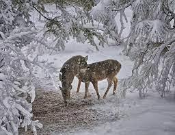 55+ Animal Winter Desktop