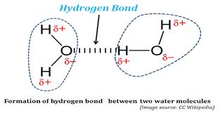 Hydrogen Bonding Formation Of Hydrogen Bonds In Water Easybiologyclass