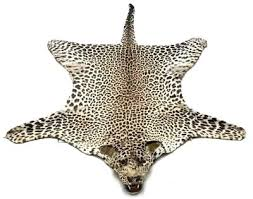 cheetah skin rug leopard real taxidermy vintage with head and certificate cites