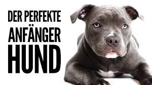 Informieren sie sich sowohl über kleine hunderassen als auch große. Hunderassen Fur Anfanger Die 9 Besten Pflegeleichten Hunde